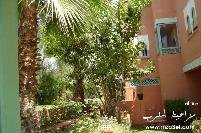 صور منتجع النخيل في مراكش